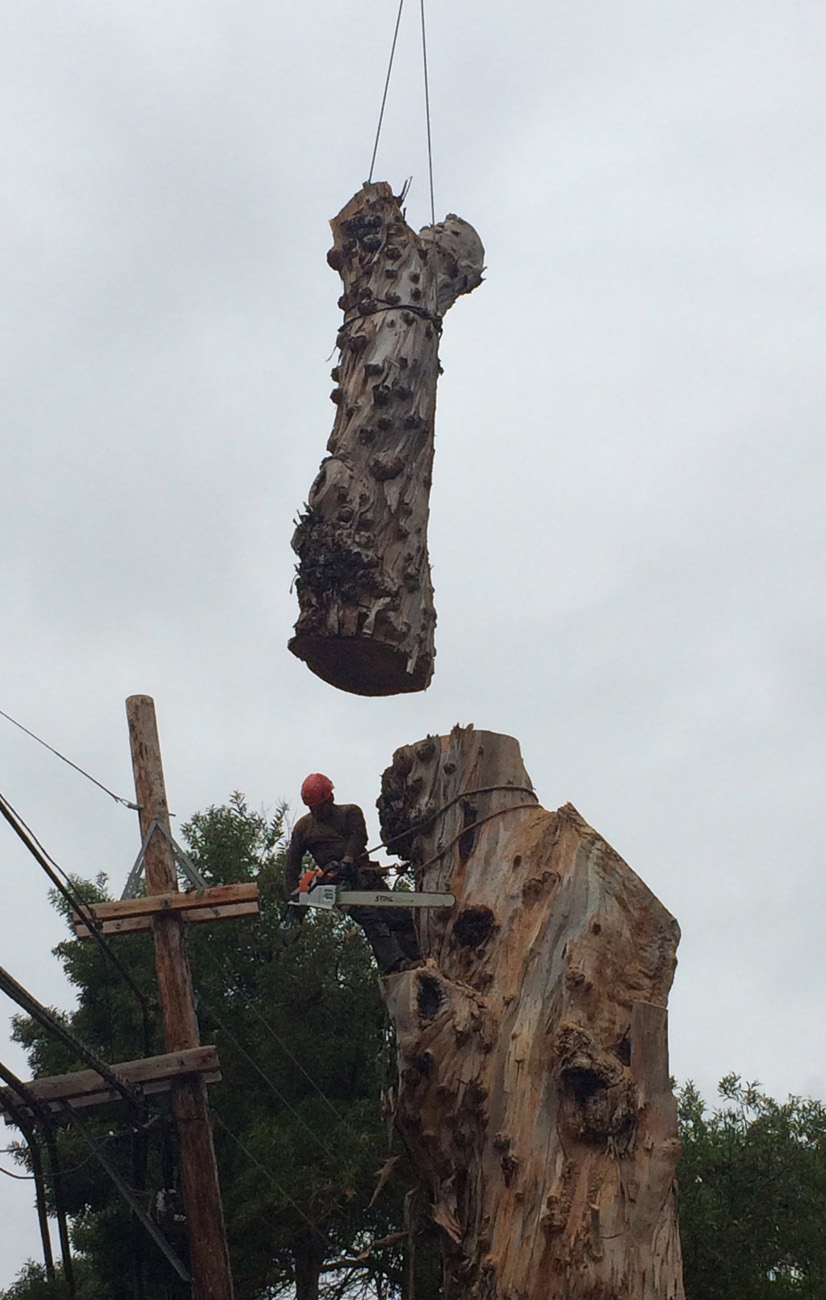 Tree Cutting And Removal Gosnell Tree Amp Landscape